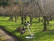 Рабочие в сады